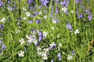 IMG_9905_wild_flowers