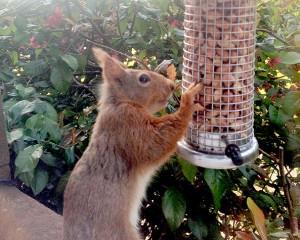 gallery_squirrel